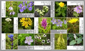 shizen005.jpg